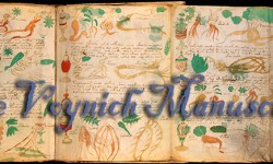 Voynich Manuscript - Just Energy Radio